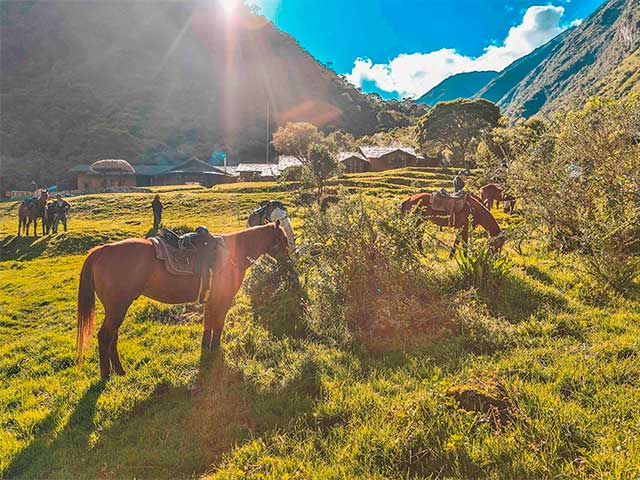 ride on a Peruvian Paso horse in the Sacred Valley