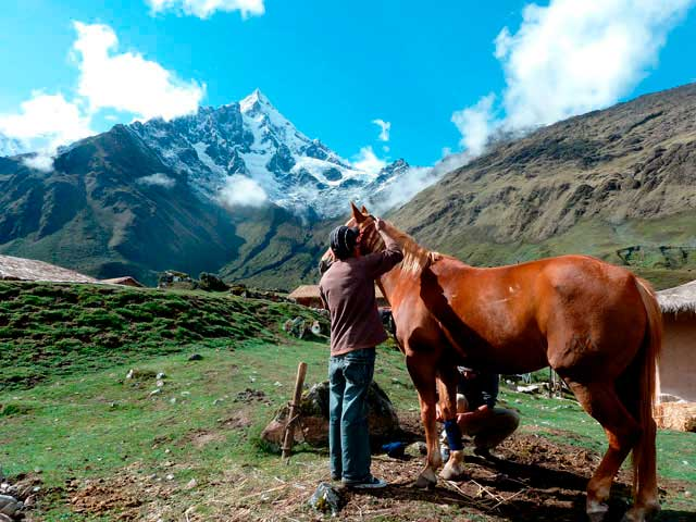 Mountain Lodges of Peru Horse