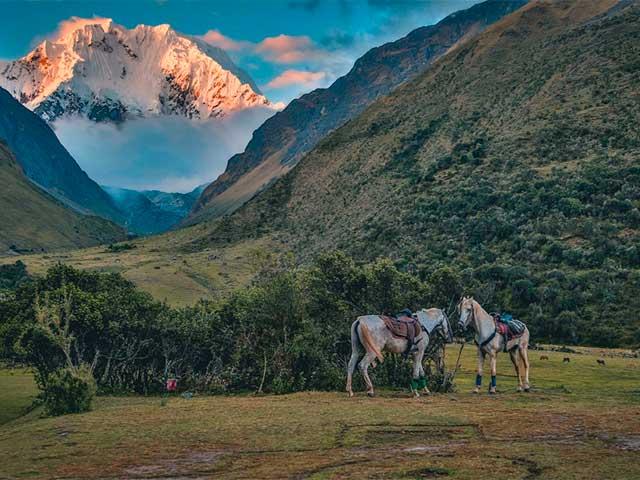 Horse Salkantay