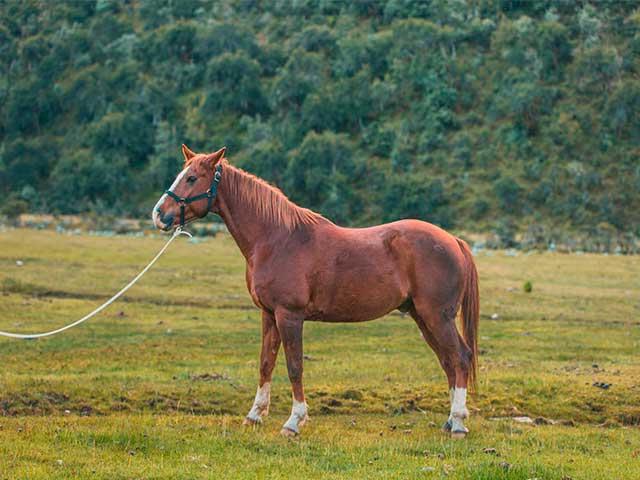 Cusco Horseback